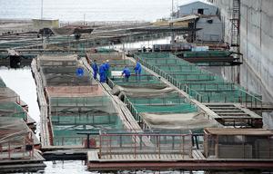 садок рыбоводческий